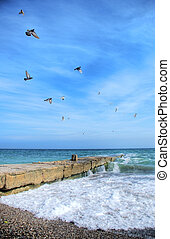Flying gulls over the blue sea