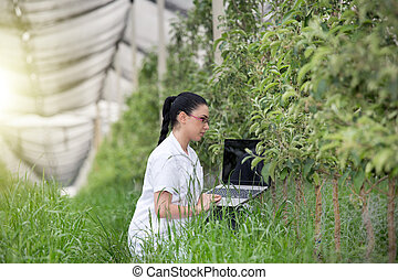 Woman with laptop in apple orchard - young agronomist with...