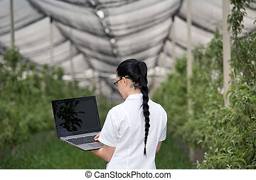 Woman with laptop in apple orchard - Rear view of young...