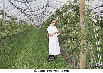 Woman in apple orchard - Young smiling agronomist with...