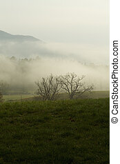 Spring, Cades Cove, Great Smoky Mtns NP, TN