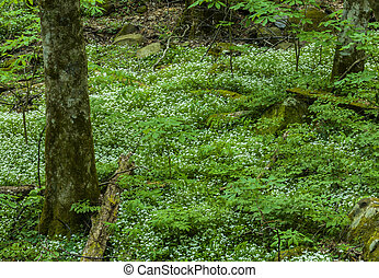 Spring, Great Smoky Mtns NP, TN