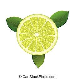 Citrus Fruit Foliage - Citrus fruit with foliage on the...
