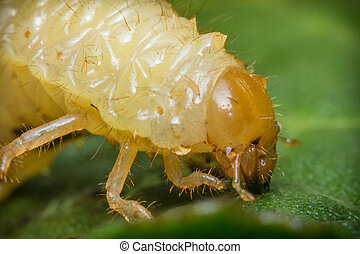 Caterpillar Maggot Mealworm - Ugly caterpillar maggot...