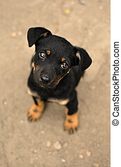 Sad And Lonely - Abandoned, frightened young black dog, left...