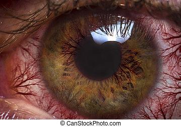 Macro Red Eyeball