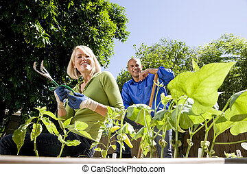 Couple working on vegetable garden in backyard - Mid-adult...