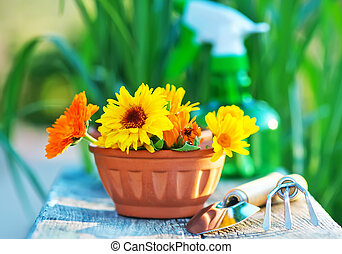 garden tools - flowers and garden tools on the wooden table