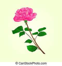Pink rose stem vector.eps