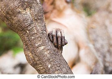 Monkey hand fingers
