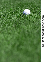 golf field and golfball - pictire of green grass and white...