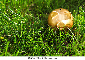 Moneybox on the grass - Gold pig moneybox on the grass...