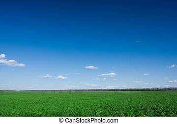 green grass and blue sky - fresh green grass and blue sky...