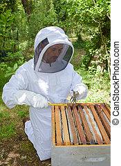 apicultor, en, trabajo,