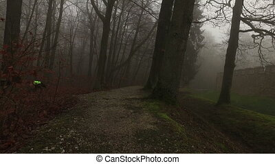 Old Historical Ancient Castle Walls and Forest in Misty...