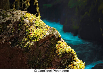 Mossy Rock - Moss covered rock at Avalanche Creek, Glacier...