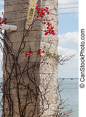 plant with thorns and flowers on stone pillar - curly plant...