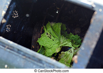 Home compost with food scraps