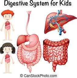 Digestive system for kids illustration