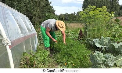 Young gardener man with hat picking harvesting fresh organic...