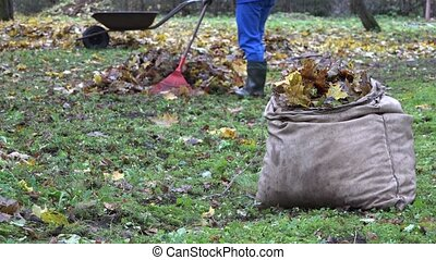 bag full of leaves and blurred gardener worker rake colorful...