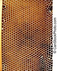 bordas, abelha