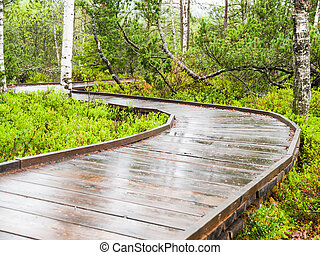 Narrow wooden path in the forest - Narrow wooden path in the...