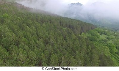 aerial view of the pine forest in the mountains