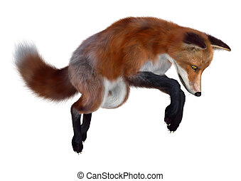 3D Rendering Red Fox on White - 3D rendering of a red fox...
