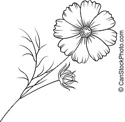 Buttercup flower isolated. - Buttercup flower isolated over...