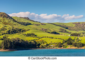 Sheep and pastures in the New Zealand - Rural Scene and...
