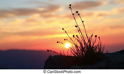 Grass on a background of the rising sun in the mountains at...