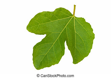 Fig leaf. - Single fig leaf, isolated over white.