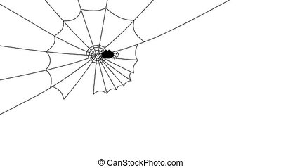 spider weaving its cobweb, quickly
