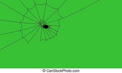 spider weaving its cobweb, slowly
