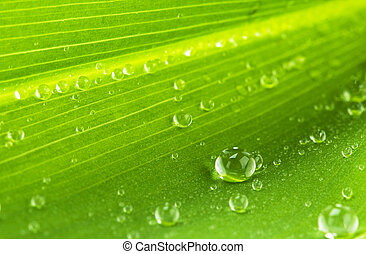 water drops on green leaf  - macro picture