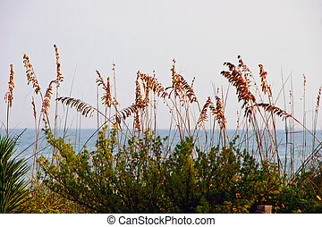 sea oats and ocean Sanibel Island Florida