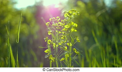 juicy green grass macro sun shines through the leaves of the...