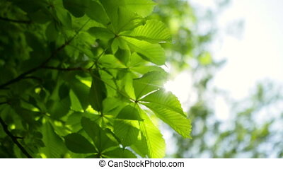 Summer sunny green tree background.