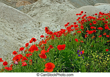 Desert and flowers 1 - Sometimes, when we don\'t have a very...