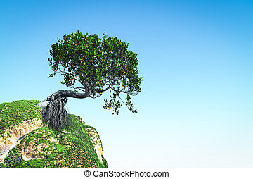 Mangrove tree on the hill 3d rendering