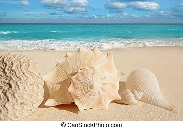 sea shells starfish tropical sand turquoise caribbean - sea...