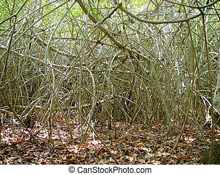 mangroove  jungle in central america wilderness