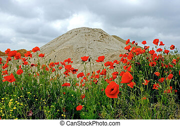 Desert and flowers 2 - Sometimes, when we don\'t have a very...