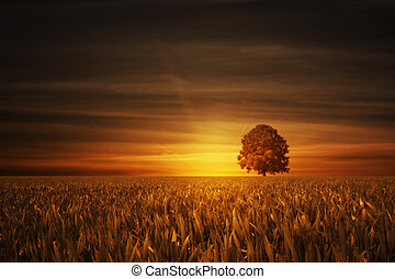lonely tree in grain field at sundown