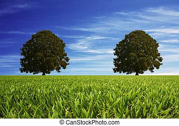 zwei, Bäume