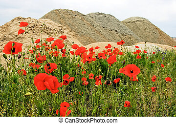 Desert and flowers 7 - Sometimes, when we don\'t have a very...