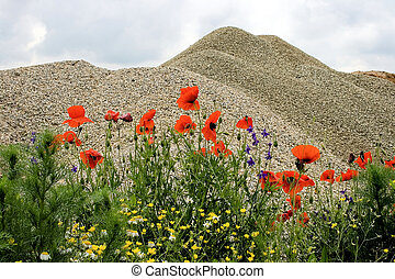 Desert and flowers 8 - Sometimes, when we don\'t have a very...