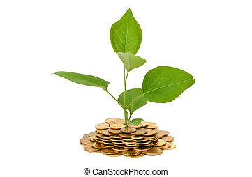 Plant and Coins - Young plant and coins isolated on white...