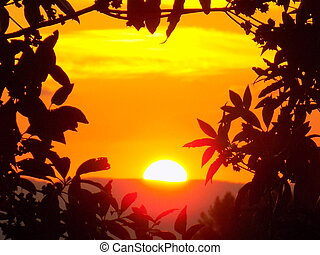 sunset - silhouette of a tree with the sunset in the center